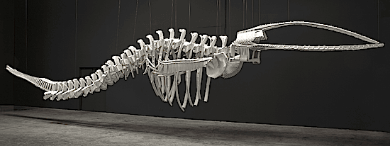 cetology-brian-jungen-art-gallery-of-ontario