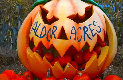 aldor-acres-jack-o-lantern