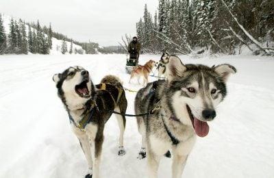 Muktuk-Kennels-Dogsledding-Tour