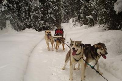 Dogsledding at Sun Peaks in British Columbia