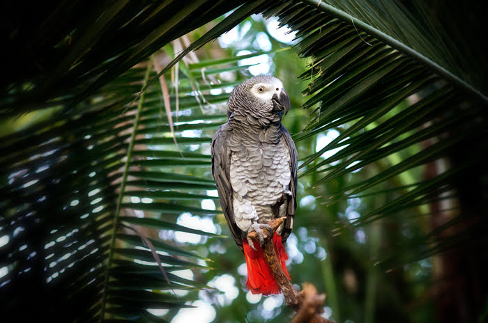 tropical-birds-at-Bloedel, Vancouver, Queen Elizabeth Park, scenic, spring