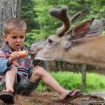 parc-omega-feeding