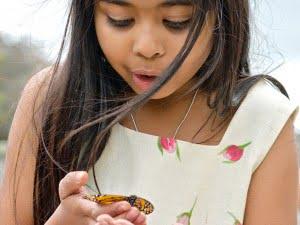 butterflies-in-ontario