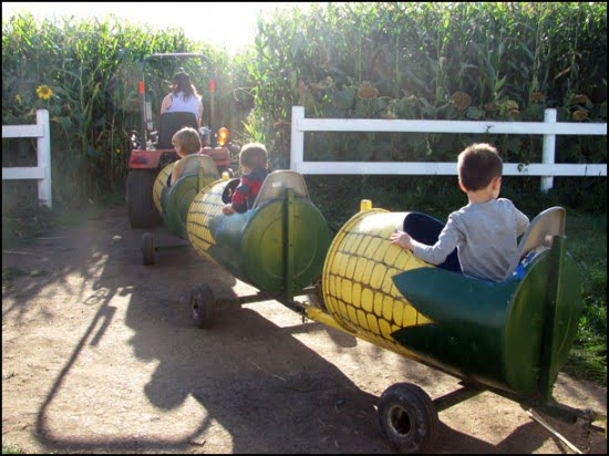 Corn-Cob-Express-Edmonton-Corn-Maze