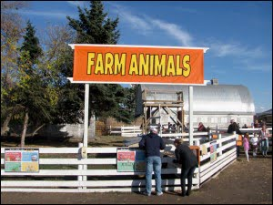 farm-animals--Edmonton-Corn-Maze