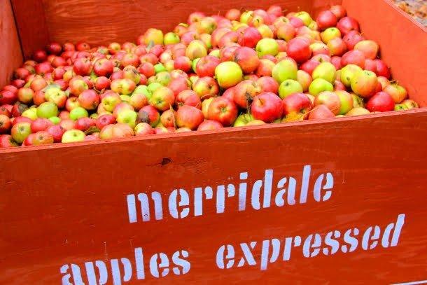 merridale-ciderworks-apples-vancouver-island