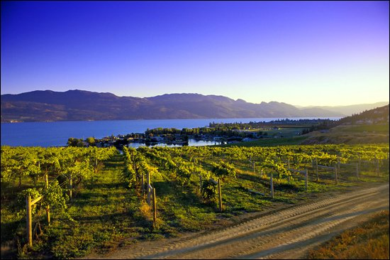 BC wines Okanagan