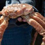 Cheticamp-crab