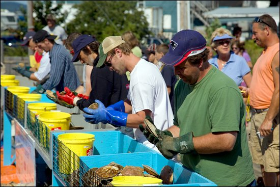 Digby-Scallop-Days-shucking-contest