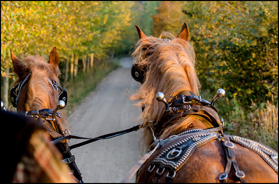 A horse drawn carriage takes visitors through Auberge Le Baluchon property in Saint-Paulin, Quebec. (Julia Pelish/Vacay.ca)