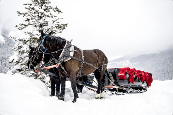 In the Canadian Rockies, winter lovers can still play in the snow or take a ride in a horse drawn carriage. (Katie Marti/Vacay.ca)