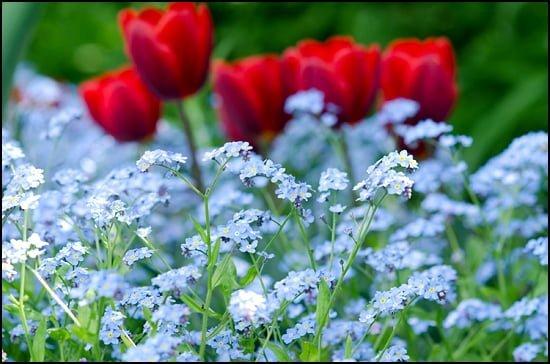 flowers-julia-pelish-photo