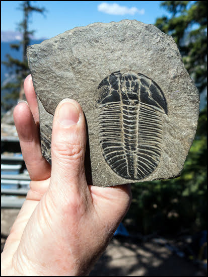 trilobite-golden-british-columbia