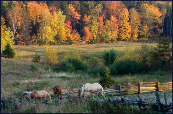 Vibrant scenery can be enjoyed on the country roads in the Lanaudière-Mauricie region that is close to both big cities of Montreal and Quebec. (Julia Pelish/Vacay.ca)