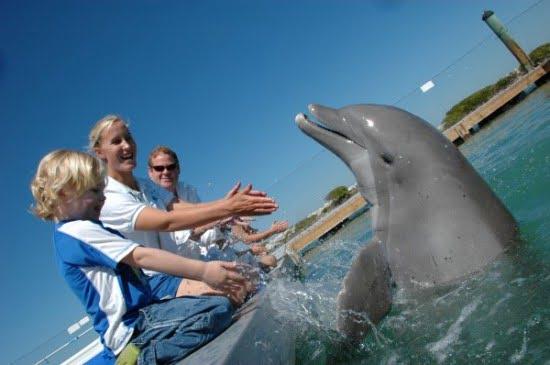 dockside-dolphin-program-hawks-cay-resort