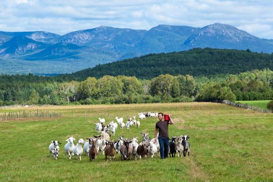 charlevoix-goat-farm-quebec