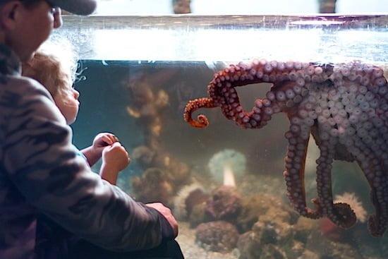 ucluelet-aquarium