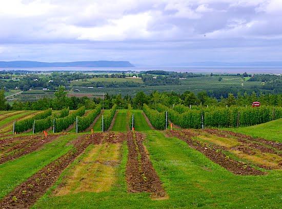 luckett-vineyard-annapolis-valley-nova-scotia
