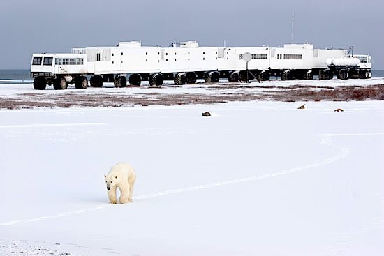 polar-bear-tundra-buggy-lodge-churchill