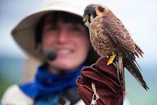 birds-of-prey-mont-tremblant