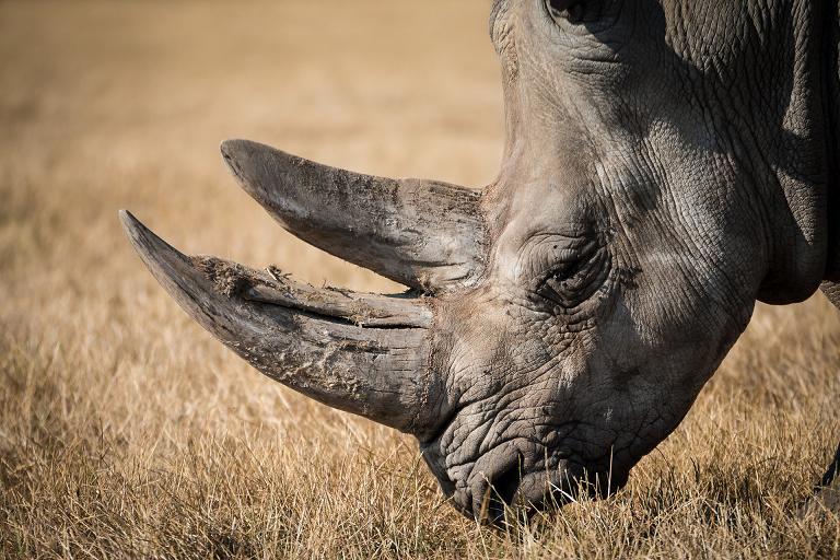 rhinoceros Vacay