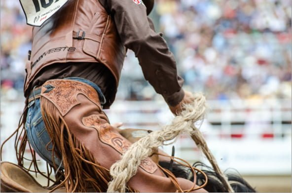 calgary stampede cowboy