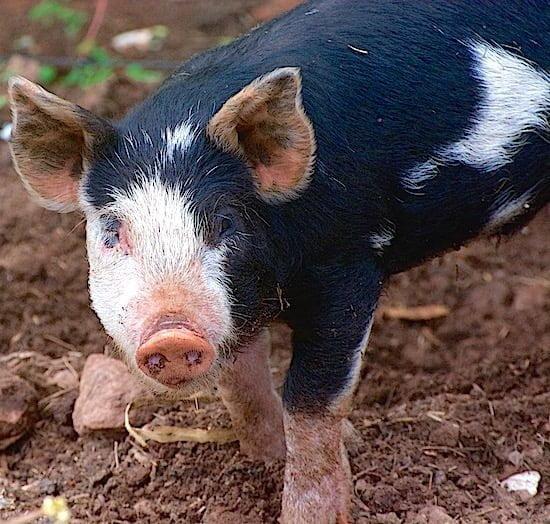 pig-inn-at-bay-fortune-pei