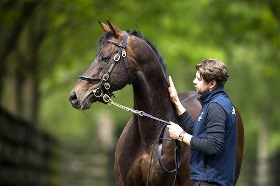 Invincible-Spirit-Irish-horse