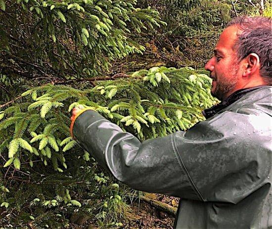 aaron-miller-foraging-haida-gwaii