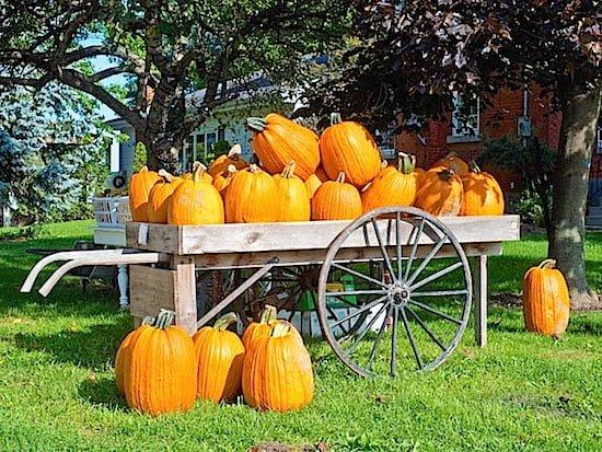 Perth County pumpkins