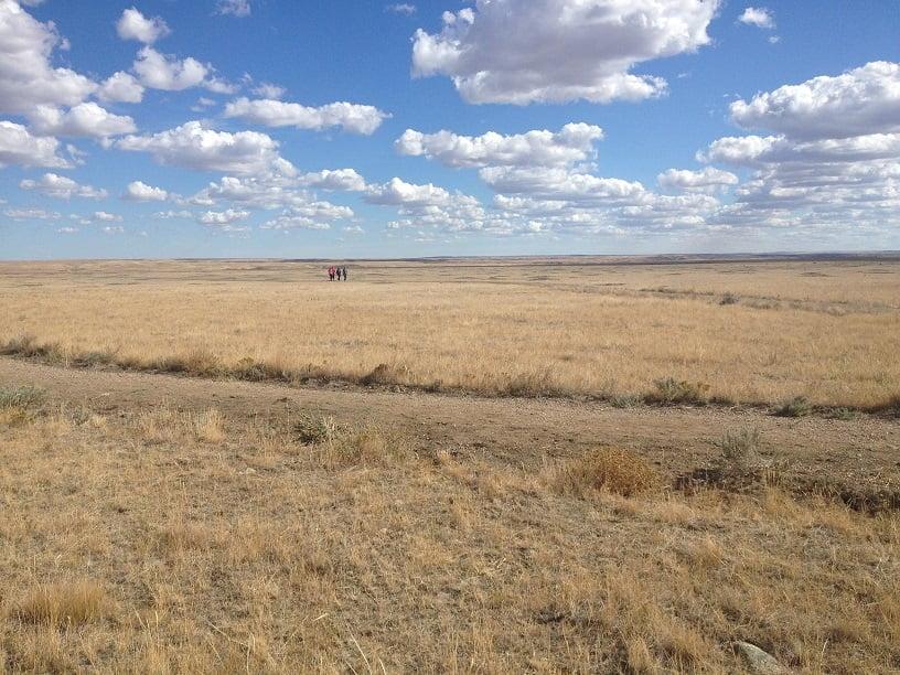 Grasslands 7