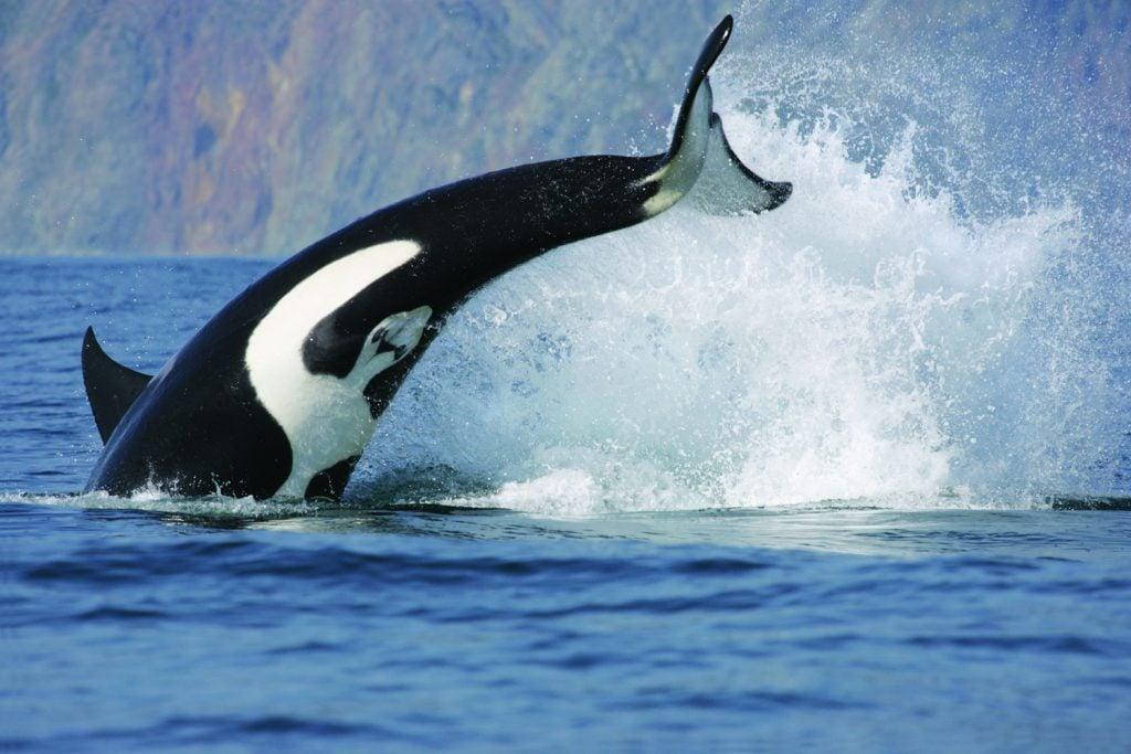 orca-lund-resort-sunshine-coast