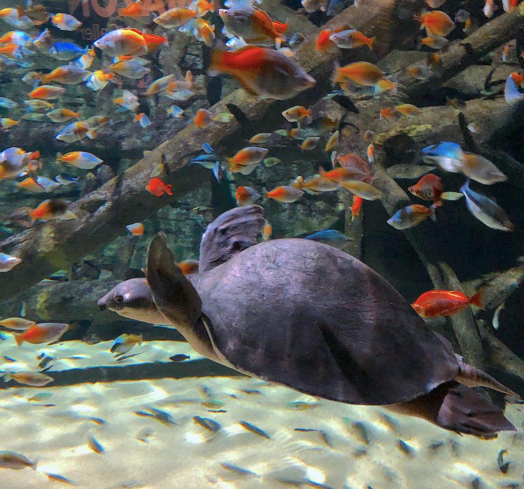 turtle-vancouver-aquarium
