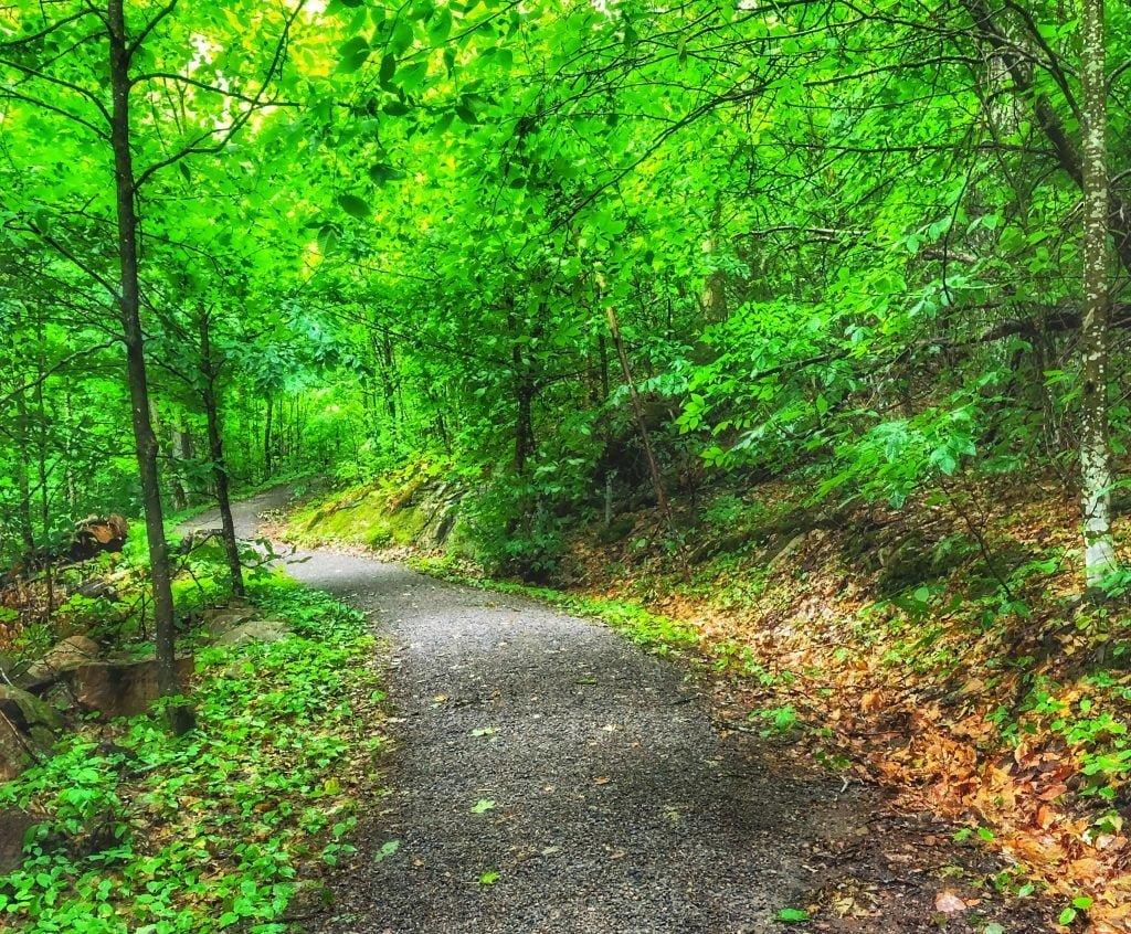 algonquin-park-hardwood-lookout-trail