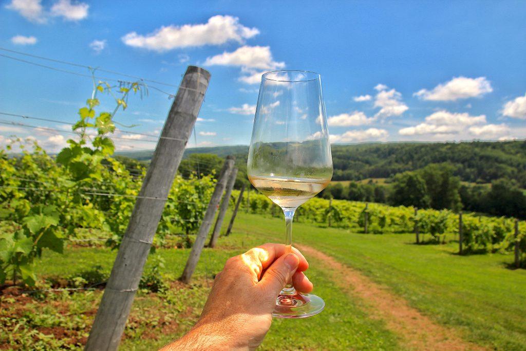 Brut Rose in the vineyard, Benjamin Bridge
