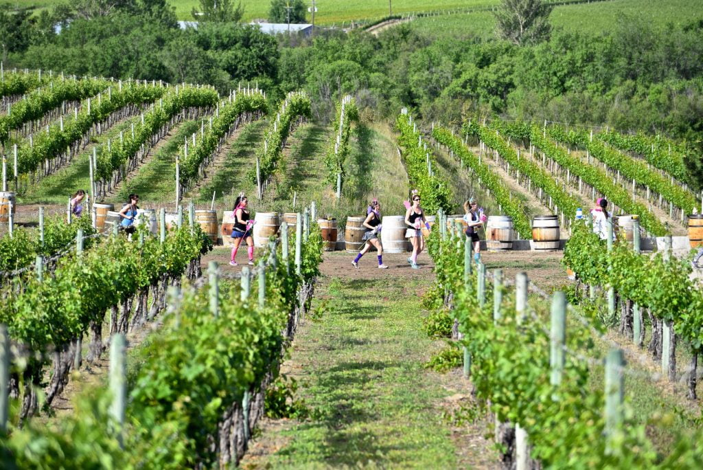 Half-corked-marathon-runnersn Frey_runners vineyard3