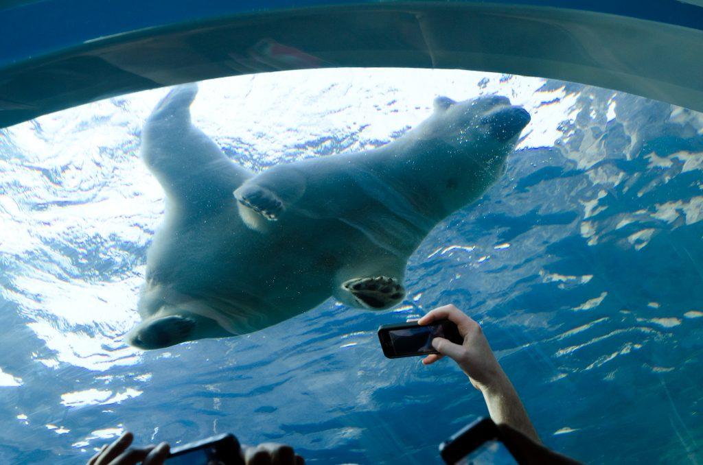 Assiniboine-Park-Zoo-Winnipeg