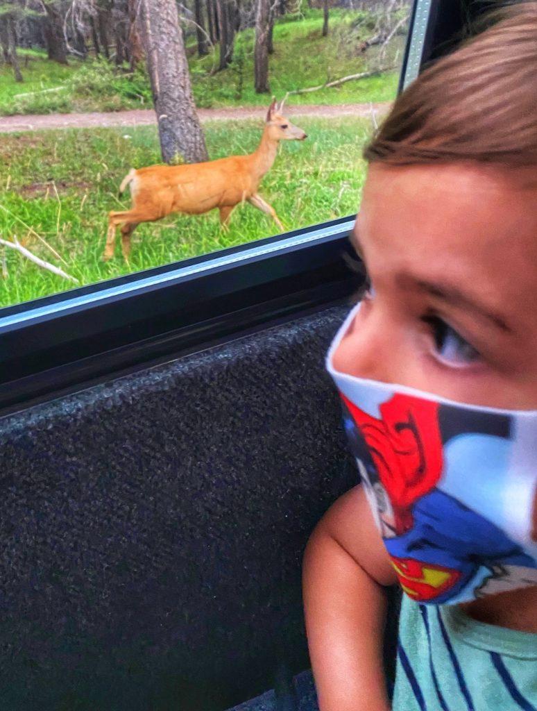 gabriel-seeing-mule-deer-banff-discovery-tours